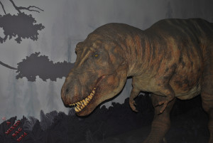 Animatronic T. Rex in a museum