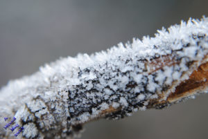 snow and ice on a tree branch
